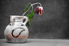 Withered Rose In Vase Royalty Free Stock Photo