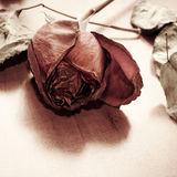 Withered rose over wooden background Royalty Free Stock Photo