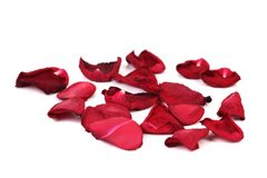 Withered Rose Petals Royalty Free Stock Photography