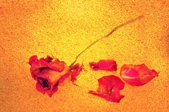 A withered rose and petals on golden grungy background Stock Photo