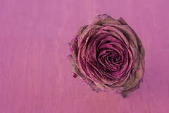 Withered rose Royalty Free Stock Photography