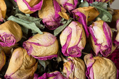 Withered roses as backdrop Stock Photo