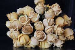 Withered roses. Bouquet of withered roses royalty free stock image