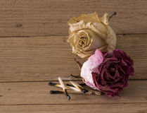 Withered roses Royalty Free Stock Photography