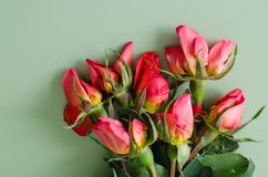 Withered roses Stock Photos