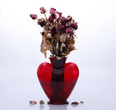 Withered roses in a vase sembolizing end of love Stock Photography