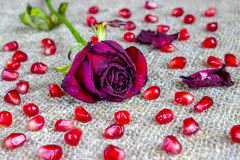 Withered s'est fané des roses Images stock