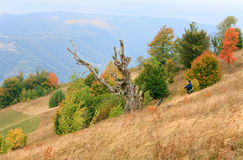 Withered tree on autumn Carpathian mountainside Royalty Free Stock Photo