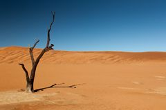 Withered tree in the desert Stock Images