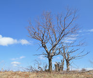 Withered tree Stock Photos