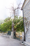 Withered tree near the entrance to the monastery Rezevici in Montenegro Stock Image