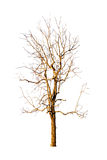 Withered tree Royalty Free Stock Photos