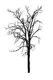 Withered tree Royalty Free Stock Photography