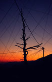 Withered tree in the wires. Withered tree, many wires extending from the different parties and sun going down in the mountains Royalty Free Stock Images
