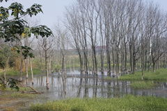 Withered trees without any leaves  standing on the flooded pool(Jiaxing,China) Stock Photo