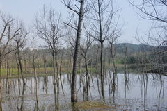 Withered trees without any leaves  standing on the flooded pool(Jiaxing,China) Stock Photos