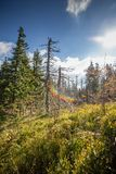 Withered trees in dead forest photo with colorful lens flare stock photos