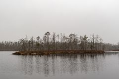 Withered trees island in the lake. stock photo
