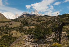 Withered trees in Los Glaciares National Park Royalty Free Stock Image