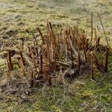 Withered trimmed plants. Closseup shot made in a good weather day stock photos