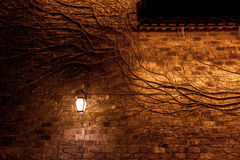 Withered vine, lamps, wall Royalty Free Stock Photos