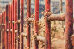 Withered vines. Mottled rust on the railing of a withered vines Royalty Free Stock Photo
