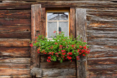 Withered window with geranium decoration Royalty Free Stock Photo