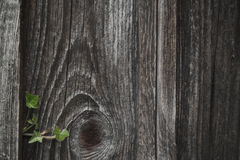 Withered wooden wall Stock Photo