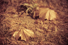 Withered yellow leaves for backgrounds and textures Royalty Free Stock Image