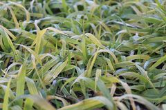 Withering grass in november near the house stock photos