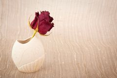 Withering rose Royalty Free Stock Image