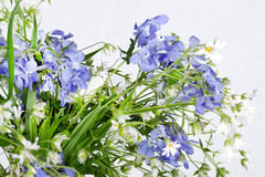 Withering wild flowers Stock Images
