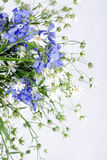 Withering wild flowers Royalty Free Stock Photo