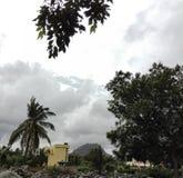 Withtree gentil de ciel photo libre de droits