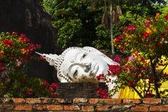 Witka Buddha w kwiacie zdjęcia stock