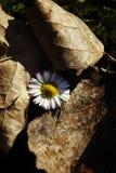 Witka kwiat zdjęcie stock