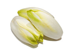 Free Witlof Vegetable Stock Image - 34645501
