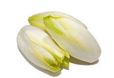 Witlof vegetable Stock Image