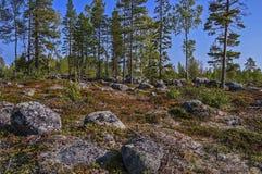 Witn septentrional mágico Finlandia de la frontera de Suecia imagen de archivo libre de regalías