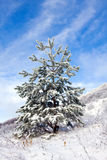 Witner tree Stock Image