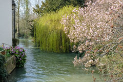 WITNEY, OXFORDSHIRE/UK - MARCH 23 : Different Varieties of Trees. Along the River Windrush in Witney in Oxfordshire on March 23, 2017 Royalty Free Stock Photos