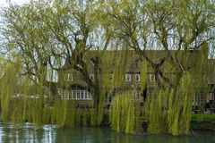 WITNEY, OXFORDSHIRE/UK - MARCH 23 : Rose Revived Public House ne Royalty Free Stock Photos