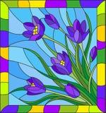Witraż ilustracja z bukietem fiołkowi krokusy na błękitnym tle w ramie Fotografia Stock