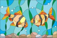 Witraż ilustracja z parą akwarium ryba barbety Fotografia Royalty Free