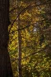Witraż jesień Fotografia Royalty Free