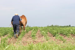 Witrussische landbouwer Stock Afbeeldingen