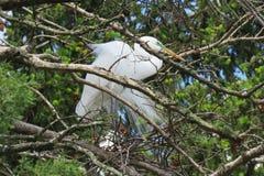 Witte aigrette op boomtak - groene en oranje kleuren royalty-vrije stock afbeelding