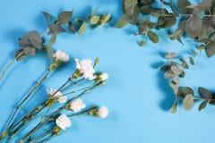 Witte anjer vier en de eucalyptus op een blauwe achtergrond met een lege ruimte voor nota's Romantische kaart Stock Foto's