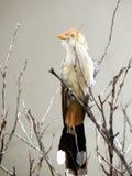 Witte anu op een droge tak stock afbeelding