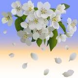Witte appelbloemen met bladeren en knop Royalty-vrije Stock Fotografie